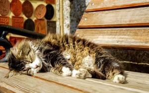 cat-2397607_1920